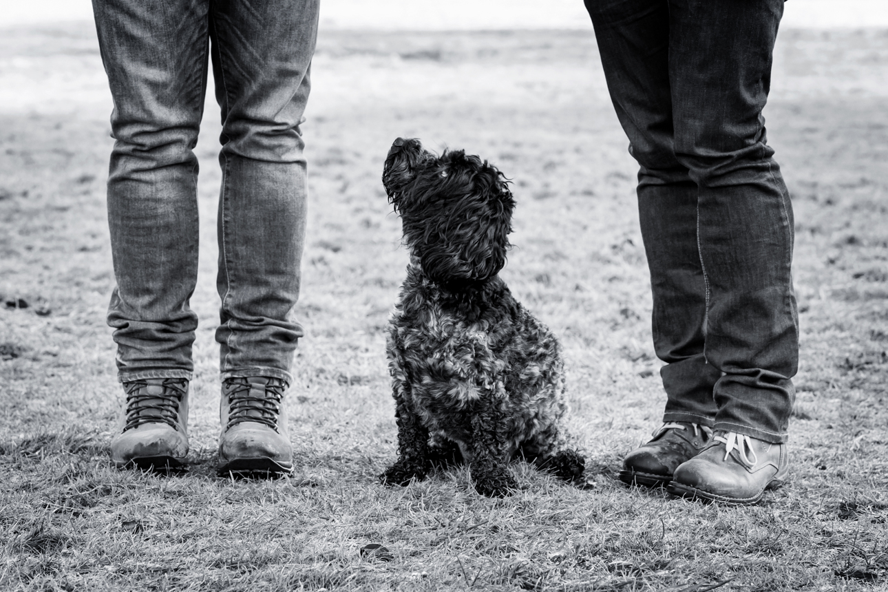 Clare J Sheridan Photography - A black Cockapoo sat between two pairs of legs