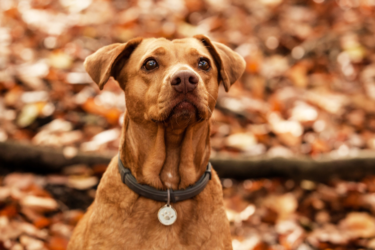 Clare J Sheridan Photography - Ginger mixed breed dog in woodland