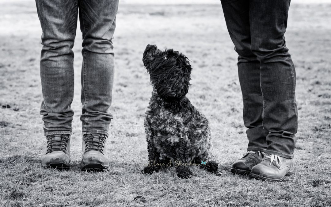 Black Cockerpoo stood between 2 owners - Clare J Sheridan Photography